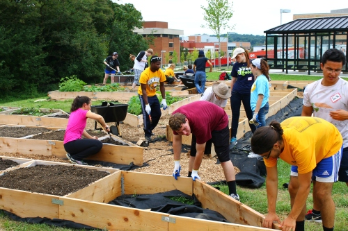 """Students and others """"breaking ground"""" on a community garden at UMBC."""